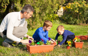 Post-adoption boys gardening with father